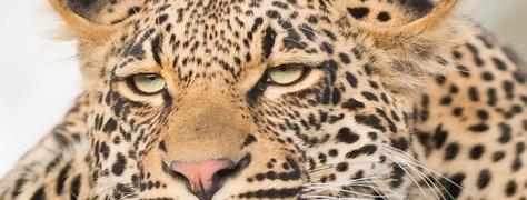 Legend Safaris (3)