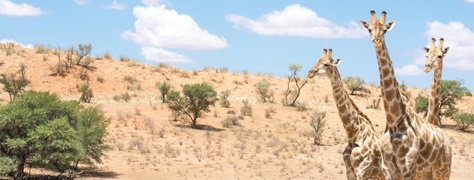 Legend Safaris (5)