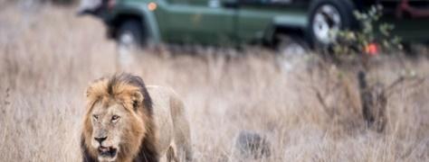 Legend Safaris (6)