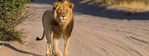 Legend Safaris (7)