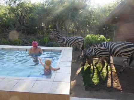 splash-pool_silly-fun-and-zebras
