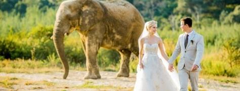 Askari Weddings (10)