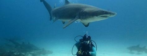 Junglers Diving (2)