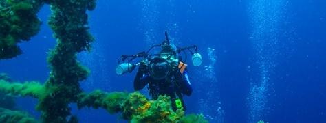 Junglers Diving (3)