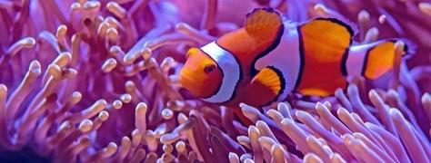 Junglers Diving (4)