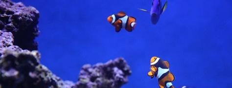Junglers Diving (5)