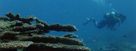 Junglers Diving (8)