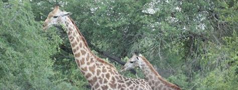 Martothi Safari Park (5)
