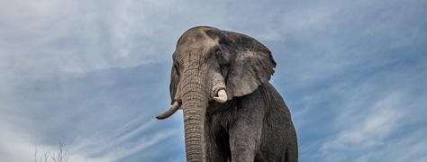 HeritageTours&Safaris (1)