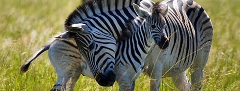 HeritageTours&Safaris (8)