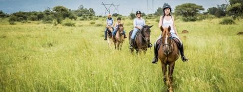 Horse & Trails (21)