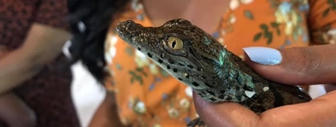 Crocodile Creek Ballito (2)