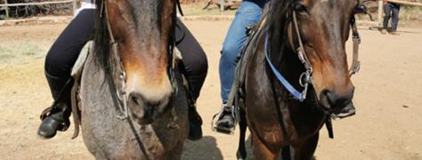 HorseRiding_HollybrookeFarm (3)